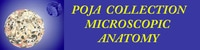 POJA Collection Microscopic Anatomy